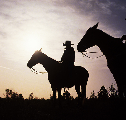 Horse Back Riding In The Jungle