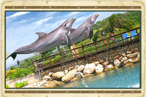 Dolphin Swim Lucea from Montego Bay