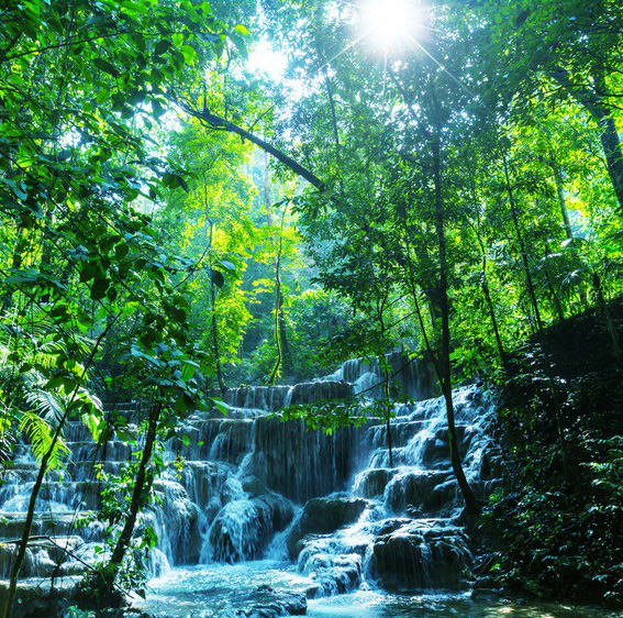 Jungle Tour
